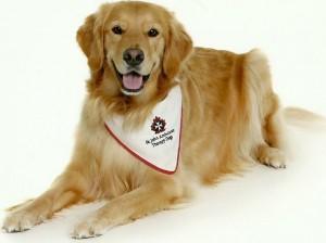 St John Ambulance Therapy Dog Program Ontario
