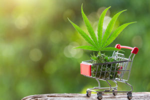 CDB Concept. Thai cannabis. The leaves and shoots of the cannabis placed in the cart and have a natural green background.